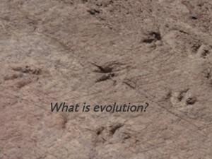 Evolution 1: Evidence